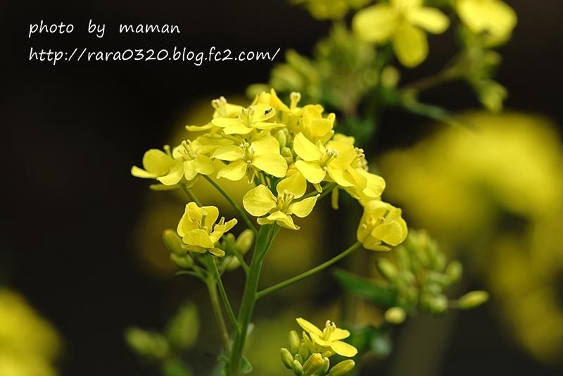DSC03057 bbbbbbb