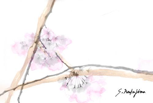 sakira004.jpg