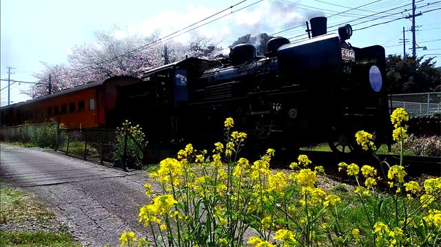 C56 44と桜と菜の花