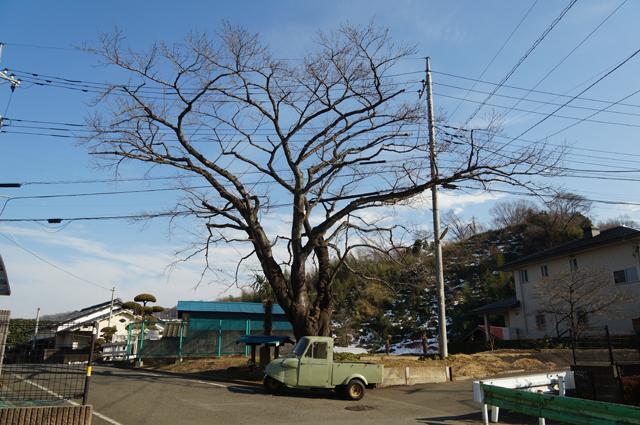 桜の木の下の祠とミゼット