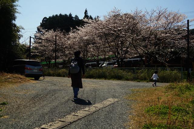 桜と線路端で