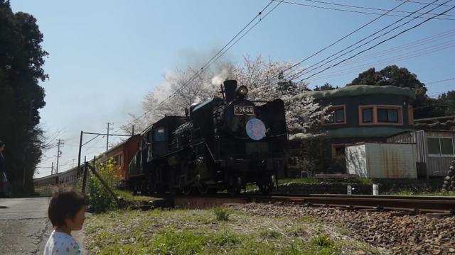 C56 44と桜