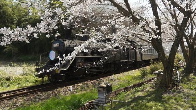 桜とC10 8