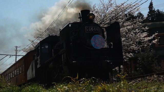 C56 44 桜の花の下を走る