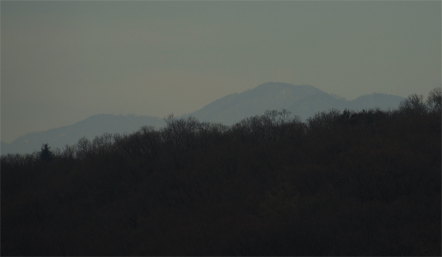職場近くから見える丹沢 芽吹きと積雪がいっぺんに