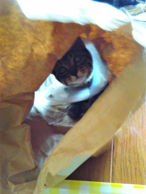 紙袋のトンネルを覗くレム