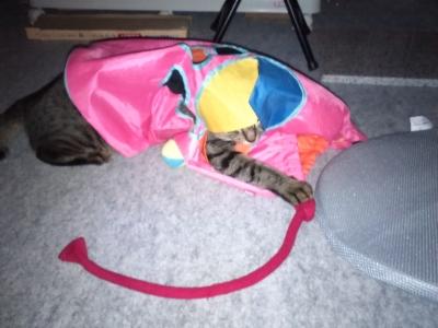 袋に隠れて紐をゲット