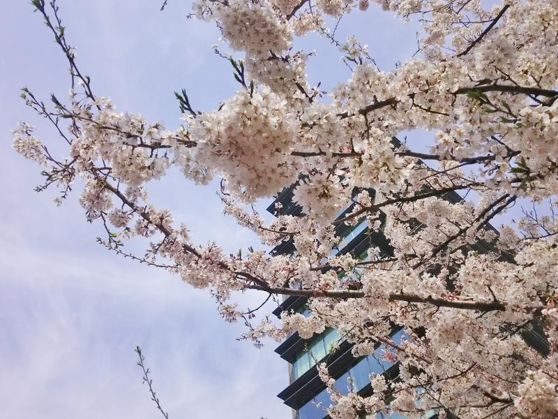 07荘川桜 (800x600)