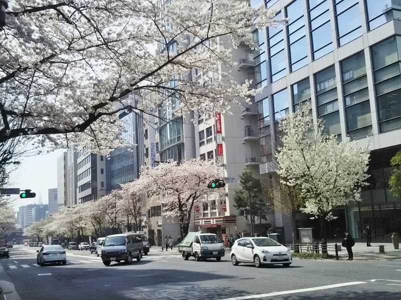 08靖国通り (800x600)