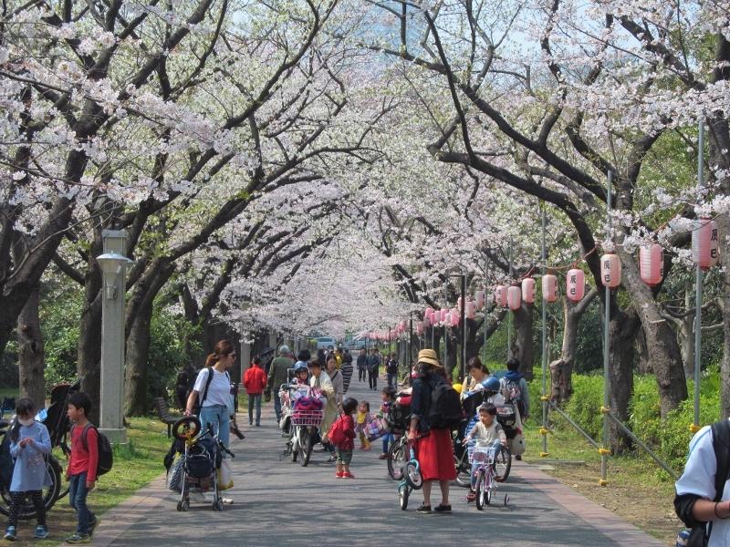 01辰巳の森緑道公園 (800x600)