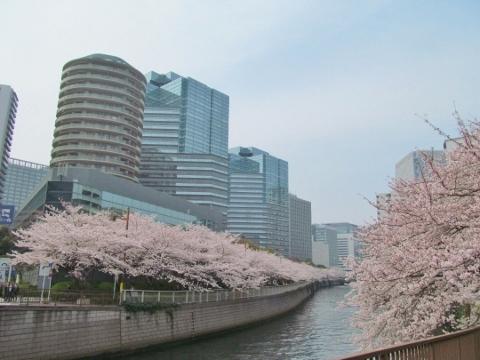 IMG_0188居木橋 (480x360)