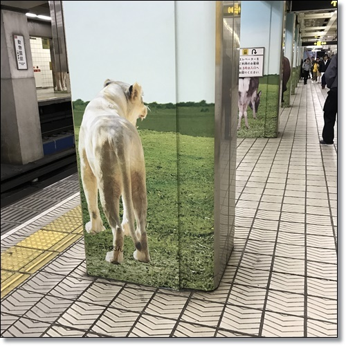 大阪IMG_4403-20180313