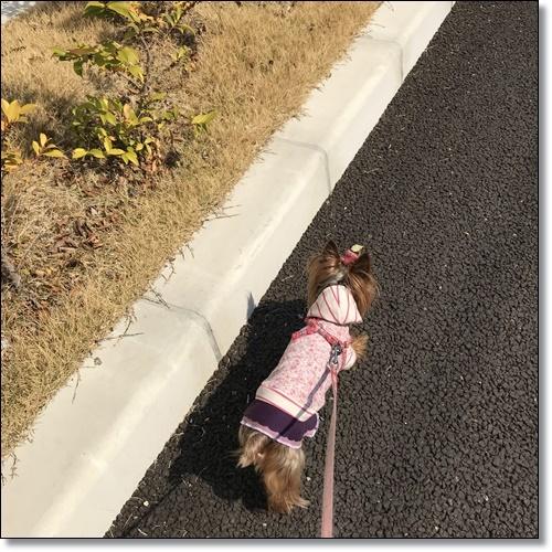散歩IMG_4458-20180315