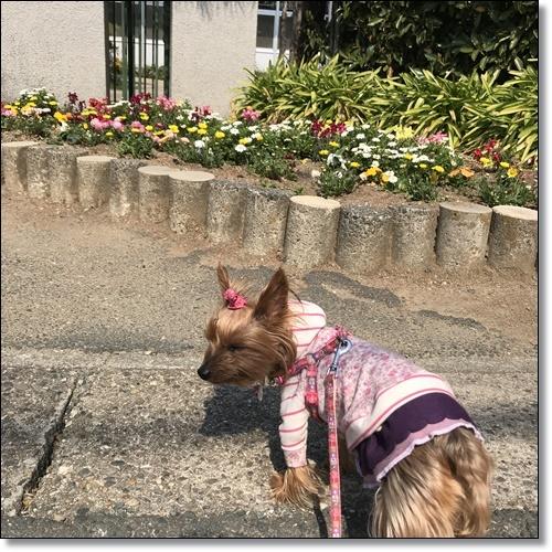 散歩IMG_4460-20180315