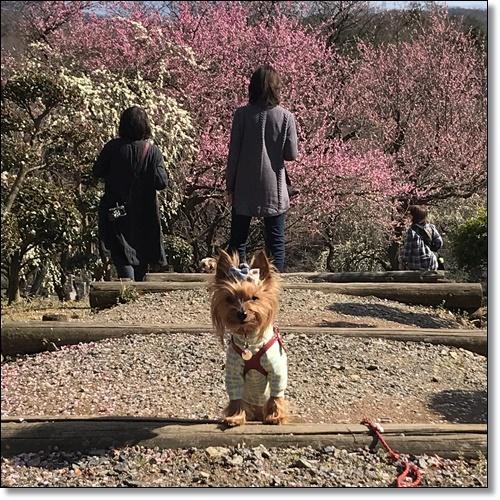 岡山と60IMG_4549-20180320