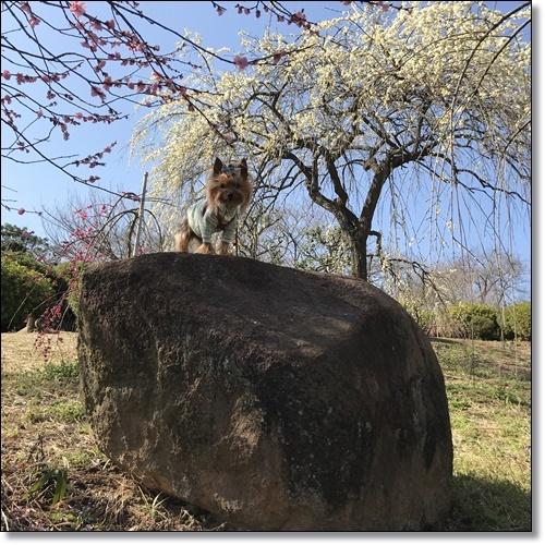 岡山と60IMG_4553-20180320