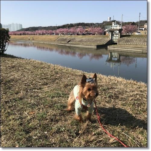 岡山と60IMG_4558-20180320