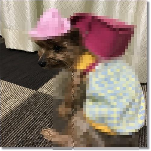 チョコママさんIMG_4680-20180328