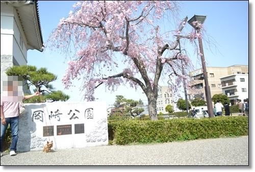桜DSC_0059-20180401