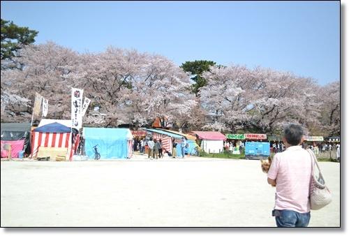 桜DSC_0067-20180401