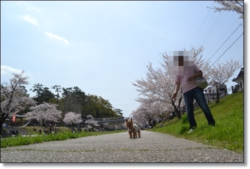 桜DSC_0076-20180401