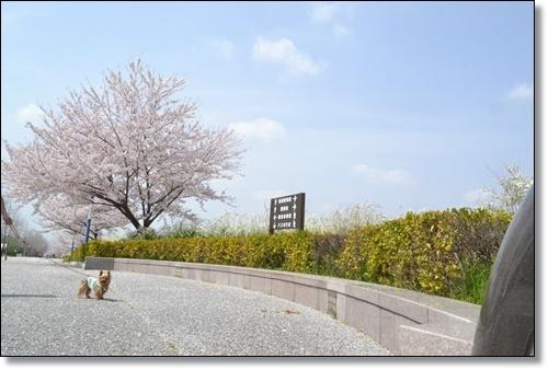 桜DSC_0100-20180401
