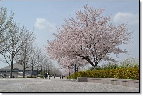 桜DSC_0102-20180401