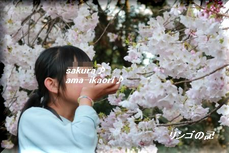 桜2018御苑②
