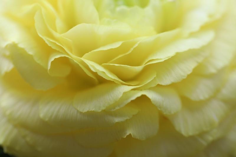 家の花4180316