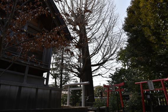 朝日氷川神社⑥