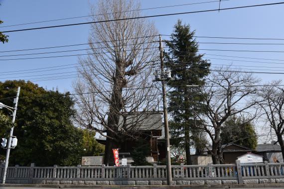 朝日氷川神社⑦