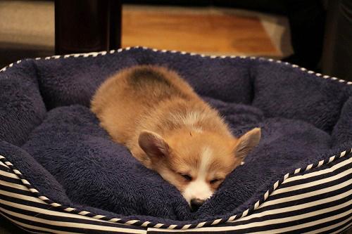 れんたんのベッドで~