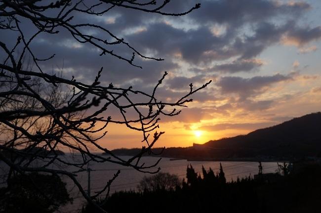 桜と朝日2