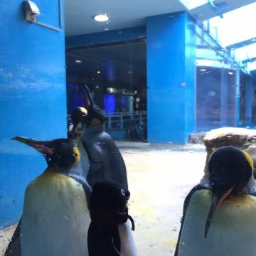 20180323-亜南極のペンギンプール (9)