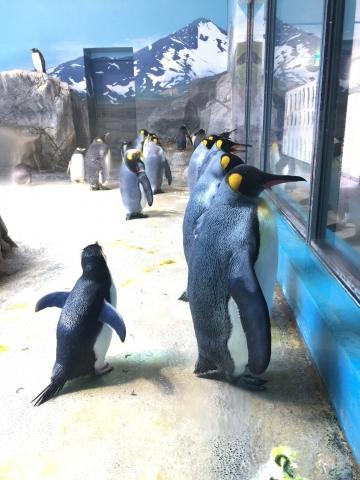20180323-亜南極のペンギンプール (7)
