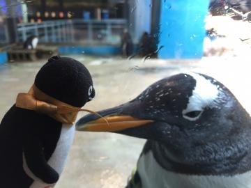 20180323-亜南極のペンギンプール (1)