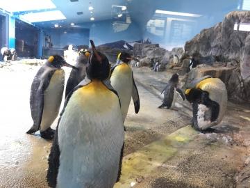 20180323-亜南極のペンギンプール (12)
