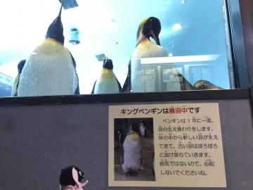 20180323-亜南極のペンギンプール (13)