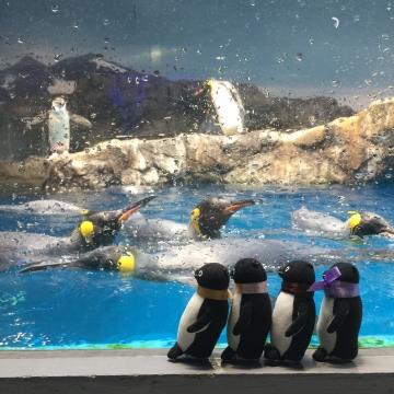 20180323-亜南極のペンギンプール 水中飛行 (6)
