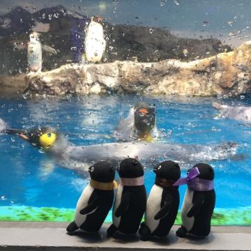 20180323-亜南極のペンギンプール 水中飛行 (5)