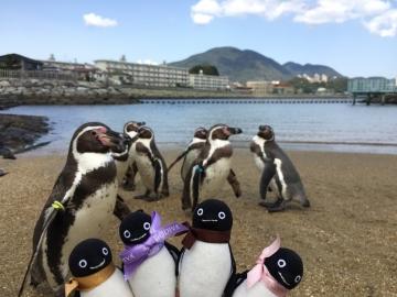 20180323-ふれあいペンギンビーチのフンボルトペンギン (6)