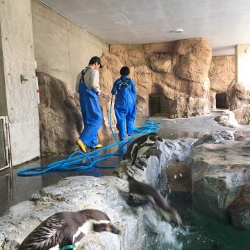 20180323-フンボルトペンギンのお帰り (8)