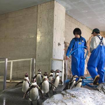 20180323-フンボルトペンギンのお帰り (3)-加工