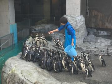 20180323-温帯ペンギンの食事pm (5)