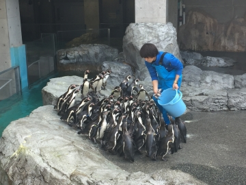 20180323-温帯ペンギンの食事pm (6)