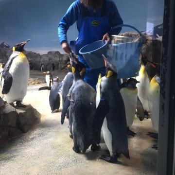 20180323-亜南極ペンギンの食事タイムpm (6)