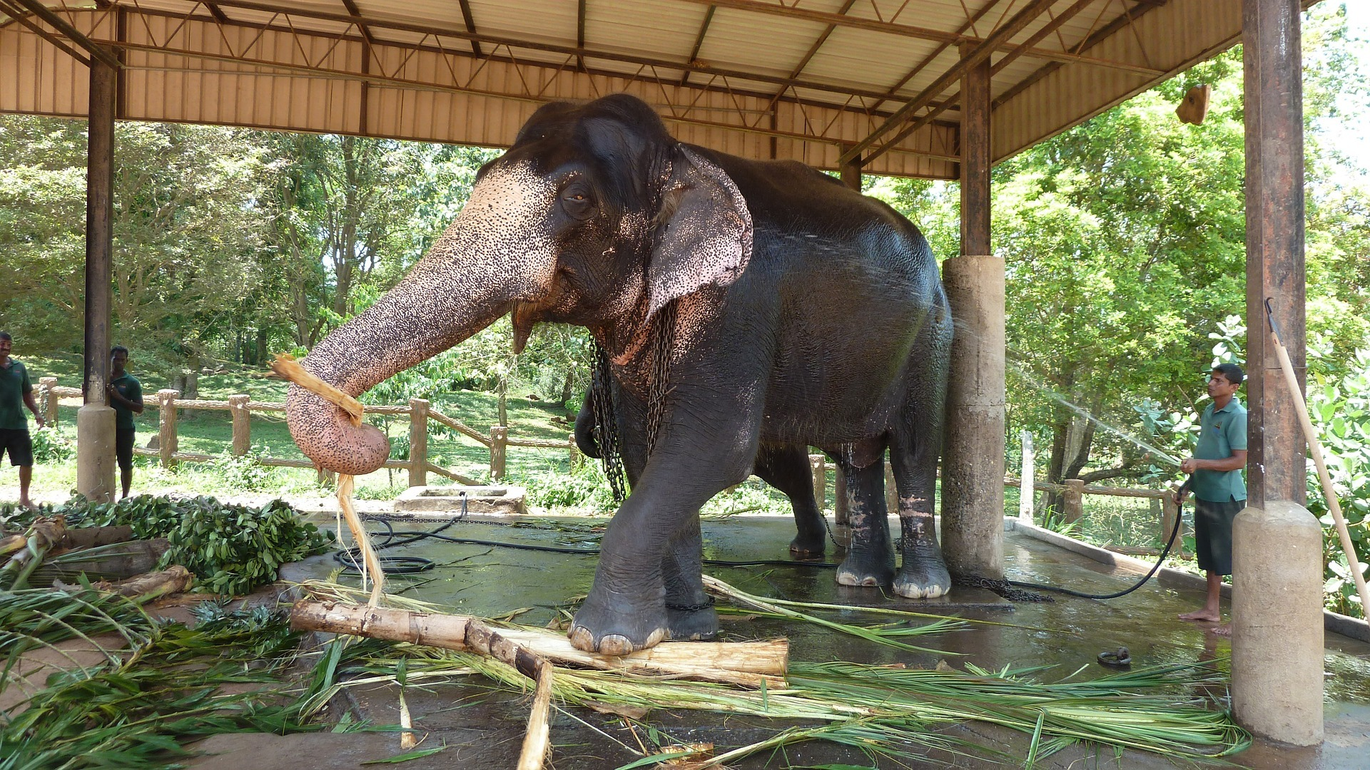 elephant-1351789_1920.jpg