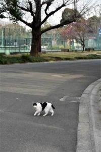 Junko The Cat