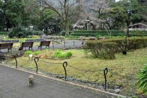 咲き始め日比谷公園の桜 Goma/Gabby The Cat