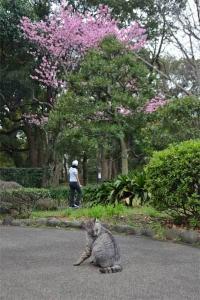 陽光桜猫 in 日比谷公園